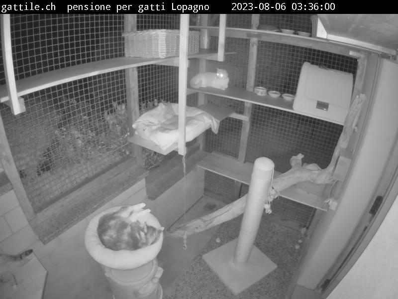 www.gattile.ch pensione per gatti